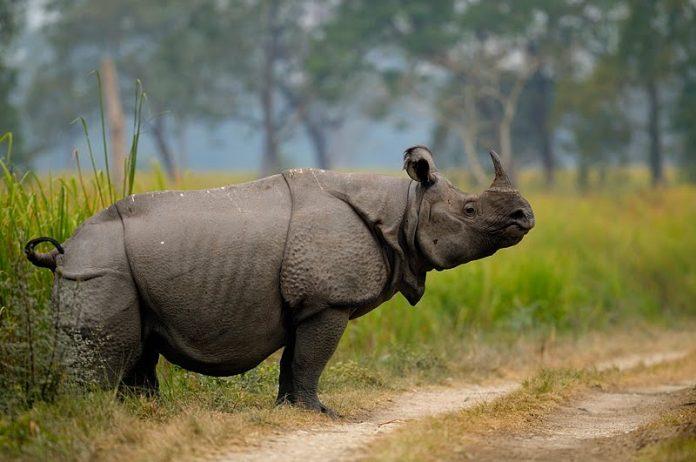 chit wan national park, chitwan tour, chitwan jungle safari