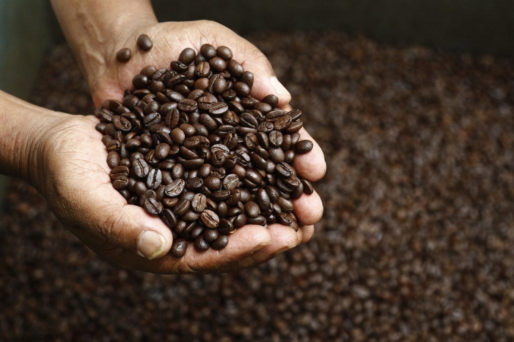 coffee farm, coffee farm in nepal